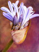 Agapanthus Art - Handful of Joy by Irina Wardas