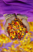Indian Girl Photos - Hands Holding Flower Petals by Tim Gainey