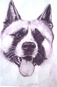 Puppy Drawings - Handsome Akita by Lucia Grilletto