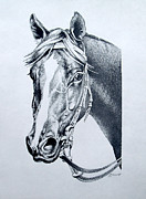 Horse Drawings Framed Prints - Handsome Framed Print by Patricia Howitt
