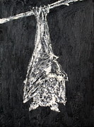 Bat Paintings - HANGING BAT - oil portrait by Fabrizio Cassetta