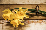 Keith Thorburn - Hanging Daffodils