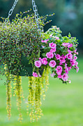 Flowerpot Photos - Hanging Garden by Alexander Senin