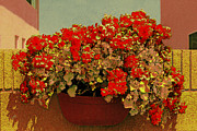 Basket Pot Prints - Hanging Pot With Geranium Print by Ben and Raisa Gertsberg