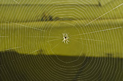 Ruse Posters - Hanging spider Poster by Saurabh Kumar Nande