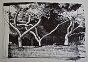 Paul Drawings - Hanks Trees by Paul VerBurg