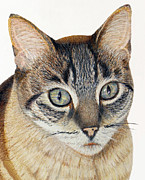 Animal Shelter Drawings - Hannah Cat Portrait by Jacqueline Barden