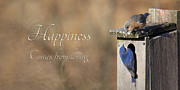 Animals Love Prints - Happiness Comes from Loving Print by Lori Deiter