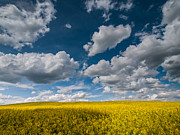 Spring Landscapes Prints - Happiness Print by Davorin Mance