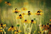 Black Eyed Susans Framed Prints - Happiness Framed Print by Joan McCool
