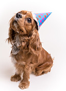 Party Birthday Party Metal Prints - Happy Birthday Dog Metal Print by Edward Fielding