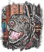 Happy Lab Framed Prints - Happy Black Lab  Framed Print by Barbara Griffin