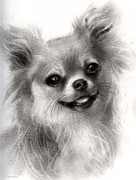 Svetlana Novikova - Happy Chihuahua dog...
