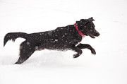 Sari ONeal - Happy Dog in Snow