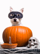 Westie Terrier Art - Happy Halloween by Edward Fielding