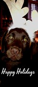 Happy Labrador Prints - Happy Holidays Chocolate Labrador Print by Gail Matthews