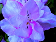 Photo Flowers - Happy Mothers Day by Allen n Lehman