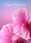 Randall Branham Art - Happy Mothers Day Macro Pink Rose Petals by Randall Branham