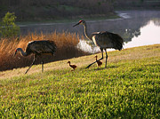 Happy Sandhill Crane Family - Original Print by Carol Groenen