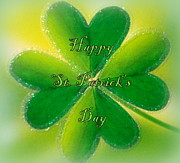 The Creative Minds Art and Photography - Happy St. Patrick