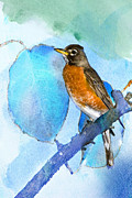 American Robin Framed Prints - Harbinger Framed Print by Betty LaRue