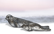 Oceans Drawings Prints - Harbour Seal pup - Harbor Seal baby - Common Seal pup Phoca vitulina - Phoque commun - Foca comune Print by Urft Valley Art