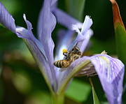 Honey Bee Photos - Hard Days Work 4 by Fraida Gutovich