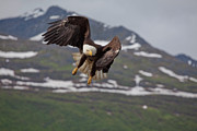 Eagle Photos - Hard Left Trun by Tim Grams