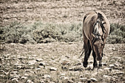 Forelock Photos - Hard Life for Wild Horses D7925 by Wes and Dotty Weber