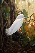 Snowy Egret Posters - Hard to Hide Poster by Tim Davis
