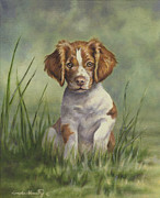 Spaniel Puppy Framed Prints - Hardwired Framed Print by Linda Shantz