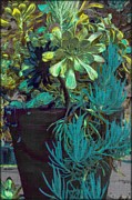 Gina  Art Photography - Hardy Succulents