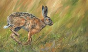 Animal Sport Prints - Hare Print by David Stribbling
