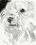 Maltese Dog Posters - Harley the Maltese Poster by Linda Minkowski