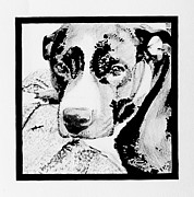 Pit Bull Mixed Media Metal Prints - Harlow Jean #1 Metal Print by Bonnie Cushman