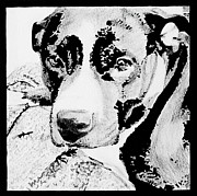 Pit Bull Mixed Media Metal Prints - Harlow Jean #2 Metal Print by Bonnie Cushman