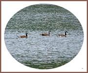 Harmonious Canada Geese Print by Will Borden