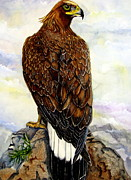 Emmanuel Turner - Harris Hawk