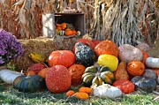 Colorado Greeting Cards Posters - Harvest Display Poster by Danny Key