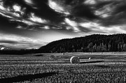 Farmland Photo Metal Prints - Harvest Metal Print by Erik Brede