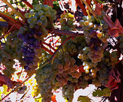Grape Leaves Photos - Harvest by Gail Salituri