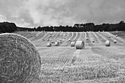 Hay Bales Posters - Harvest in black and white Poster by Georgia Fowler