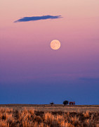 Harvest Photos - Harvest Moon by Bryce Bradford