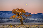 Eastern Sierra Posters - Harvest Moon Poster by Cat Connor