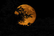 Spooky  Digital Art Originals - Harvest Moon Halloween by Andrea Lawrence