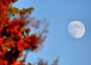 Planetoid Photos - Harvest Moon by Karen M Scovill