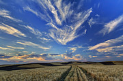 Spokane Art - Harvest Sky by Mark Kiver