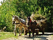 Horse And Cart Photo Metal Prints - Harvest Time Metal Print by Alison Richardson-Douglas