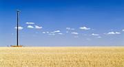 Tim Hester - Harvested Field