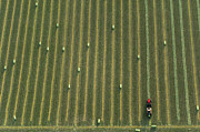 Agronomy Photo Prints - Harvesting Crop Field, Great Plains Print by John Wark